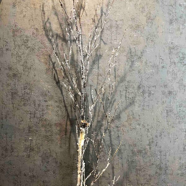 snowy white birch branch
